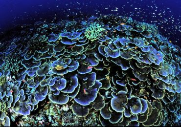 BP Moves To Drill Near Newly Discovered Coral Reef Despite Warnings From Scientists