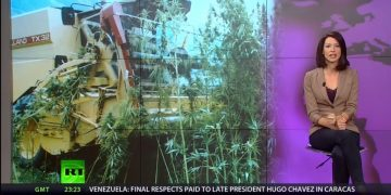 These Videos Prove That HEMP FARMS Can Provide Our Energy Needs